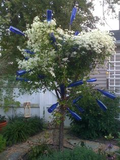 Blue bottle tree in autumn.with sweet autumn clematis blooming Blue bottle tree in autumn.with s Clematis Trellis, Sweet Autumn Clematis, Blue Bottle, Bloom, Plants, Fun, Wine Bottles, Upcycle, Trees