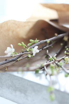 ♥ blossom #lente | www.kiem-wayoflife.com