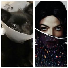 #GigabyteTheDog with the cone around her neck reminds me of the @MichaelJackson #Xscape album cover.