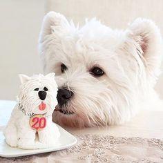 Amazing Westie birthday cake!