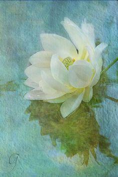 white_lotus_textures_600.jpg (398×600)
