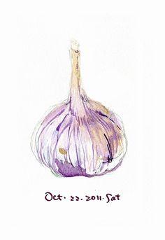 Drawing. Watercolor pencils. Garlic. Farming block.