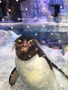 Penguin World, March Of The Penguins, Rockhopper Penguin, Penguin Parade, Detroit Zoo, Sea Creatures, Wildlife, Birds, Pets