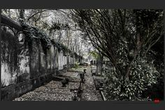 https://flic.kr/p/Bpzd3A | Autumn at the Jewish cemetery in Ferrara | © All rights reserved. Use without permission is illegal.