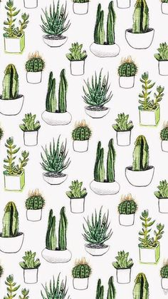 wallpaper, cactus, and plants afbeelding