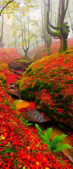Beech in Gorbea, Cantabria, Spain
