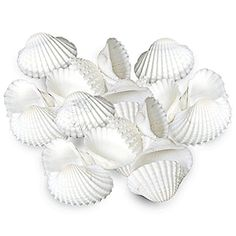 20 Natural White Seashells by Luffy - Provides Calcium & ... https://www.amazon.com/dp/B01EHVYKEE/ref=cm_sw_r_pi_dp_x_8qTWzbPMD9X7H