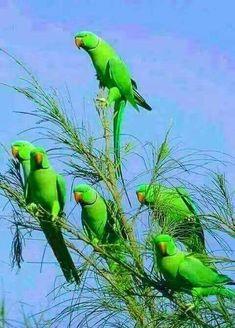 ❣️  GREEN GREEN GREEN!