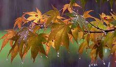 Αποτέλεσμα εικόνας για εικονες φθινοπωρου για φοντο με βροχη
