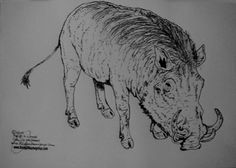 African wild boar © 2015 Biennial artists Prof.Dr.h.c.mult. cyem inc.guillaume all rights reserved www.lloydguillaumegroup.com