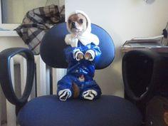 Dog's olympic wear 16+