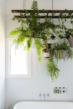Inspiring Hanging Plants Ideas for Bathroom Green bathroom. Inspiring Hanging Plants Ideas for Bathroom Green bathroom.Inspiring Hanging Plants Ideas for Bathroom Green bathroom. Hanging Ladder, Hanging Planters, Diy Hanging, Indoor Hanging Plants, Plant Ladder, Hanging Shelves, Display Shelves, Indoor Plant Decor, Indoor Climbing Plants