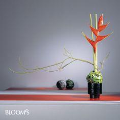 BLOOM's / Album