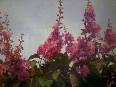Tanaman bungur atau dalam bahasa latinnya Lagerstroemia speciosa adalah tanaman pohon pelindung berbunga yang sering digunakan karena bentuk bunga yang eksotis.