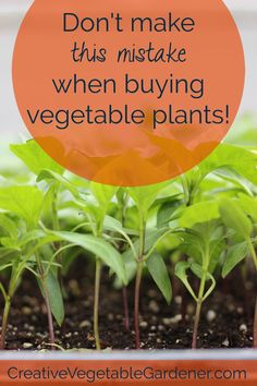 It's time for vegetable plant shopping! Set yourself up for success with this one very simple tip.