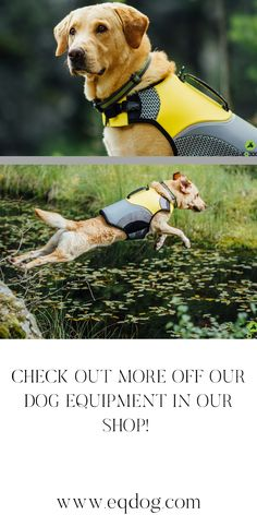 Check out our online shop for more outstanding dog equipment! Dog Life Vest, Walking Equipment, Diy Dog Treats, Dog Products, Dog Walking, New Toys, All Dogs, Dog Owners, Dog Stuff