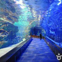 Busan Aquarium