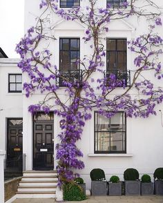 Just because . . .  Also this weekend sales picks are up on the blog.  @alpana.deshmukh #london #wisteria