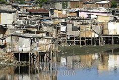 Slum ( Favela ) in the mangroves of Recife , Brazil
