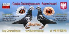 WG Wspólny Gołębnik Rejów