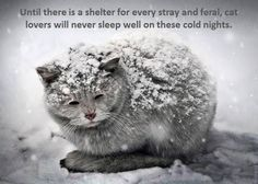 PLEASE TNR (trap, neuter/spay, return) and please take a moment to build any one of the many types of feral cat outdoor houses that will protect these babies.  There are websites everywhere that tell you what to do....look up feral cat houses and TNR..