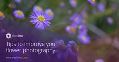 Be on top of your flower photography game for Spring.