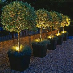 Trees in Grassy Pots with lights