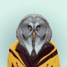 Owl #secretary #look #classy #animal #as #human #design #owl