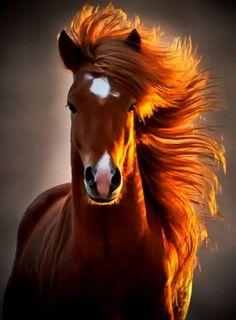 Majestic Horse.