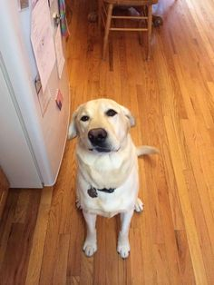 My yellow lab was born with a crooked face. Seeing it when I'm feeling blue makes my days 100000x better
