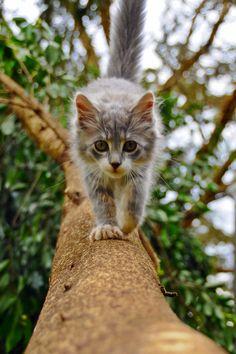 cat-tree #TreePlan - Top 10 at - Stylendesigns.com!