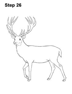 Learn how to draw a Red Deer with this how-to video and step-by-step drawing instructions. Easy Reindeer Drawing, Deer Drawing Easy, Raindeer Drawing, Easy Christmas Drawings, Easy Drawings, How To Draw Reindeer, Animal Paintings, Animal Drawings, Drawing Body Proportions