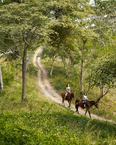 Instead of a nature walk, opt to explore CostaRica's lush landscape on horseback.