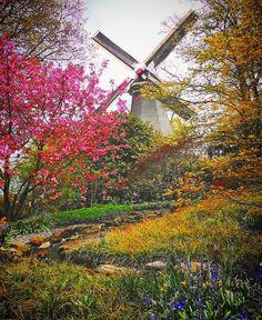 Parece cenário de filme mas é real... É primavera na Holanda!!  Foto da nossa amiga e correspondente internacional Paulinha!  #keukenhof #Holanda #netherland #moinho #flor #flower #colorful #love  #amazing #amazingtrip #viagem #trip #turismo #blogdeviagem #vamosfugir #amoviajar #rbbv #rbo #instatrip #instatravel #instatravelling #instaviagem #braroundtheworld #vibenaviagem #brazilovers #missaovt #revistaviagem #viagemeturismo by vamosfugirblog