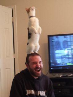 ネコちゃんは人間の事をでかい猫と認識してるらしい                                                                                                                                                                                 もっと見る