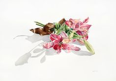 'Pink Lilies' 2013 -  watercolour on paper by Pip Boydell