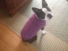 Ravelry: Project Gallery for Fabulous Dog Cozy (sweater) pattern by Judith Hufnagel