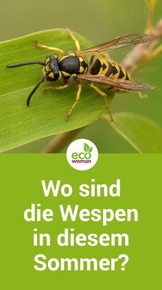 Im letzten Sommer hatten wir in Deutschland eine ganze Wespen-Invasion. Auch dieses Jahr ist längst Wespenzeit, aber wo sind die Wespen in diesem Sommer? Die Wespen-Plage kommt auch in diesem Jahr noch! Erfahren Sie effektive Tipps gegen Wespen. #wespen #wespenplage #insekten #sommer