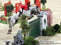 Maximum Credit, Holsteiner gelding by Indorado. Christa's horse.