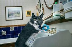 House_Cat_Cleaning_The_Bathroom.jpg (570×379)