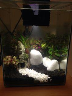 88 best fish images aquarium ideas aquarium aquarium fish tank