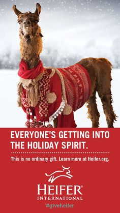 Give a meaningful gift that everyone will love - a donation to Heifer International! Choose an animal that will be given to a family struggling with hunger and poverty. The animal will provide nutritious milk or eggs that can be eaten or sold for income!