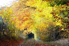 Tunnel de feuilles et de lumière #chasinglight #goldencolors #lumiere #campagne #countryside #automne #fall #nouvelleaquitaine #nouvelleaquitaine_focus_on #limousin #igerslimousin #creuse #chemindecampagne #pathway #nikon
