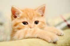 animal, awesome, baby, cat