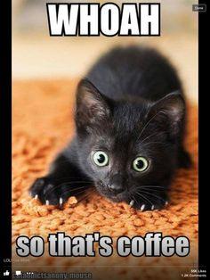Caffeinated Kitty! Haha!