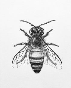 pencil scetches of bees - Yahoo Image Search Results