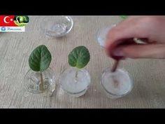 Evde Köklendirici Tozu Yapımı 2 (Aspirin) - YouTube
