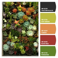 Succlents - Paint colors from Chip It! by Sherwin-Williams