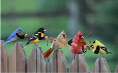 A little bird orchestra? It's just too cute!