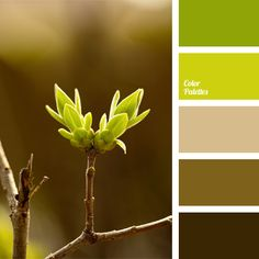 Combination of bright green and natural brown hues. This color scheme can be used for exterior trim of a cottage house, design of a sundeck, pergola or kitchen of a country house or city apartment. Panoramic photos of wildlife, made with this color palette complement the classic interior of office or living room.